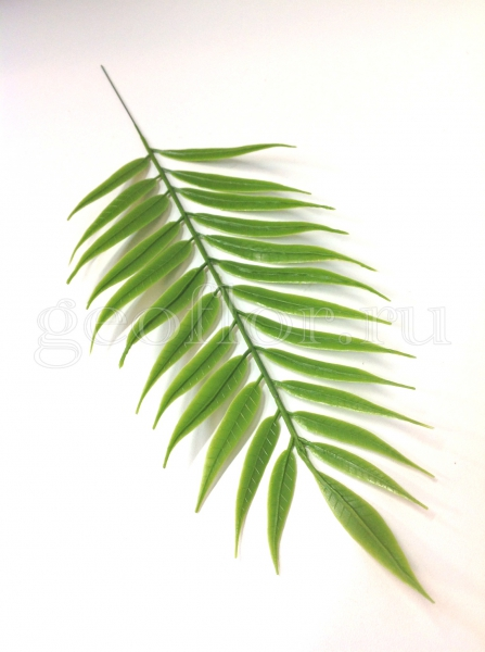 Пальма плоская, пластик
