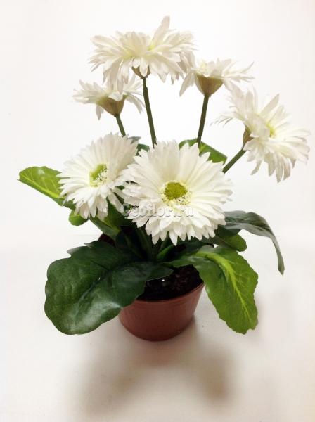 Цветы в горшке петербург