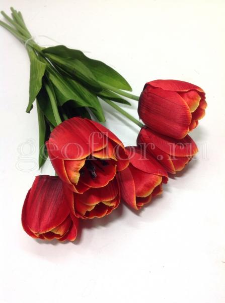 Одиночный тюльпан