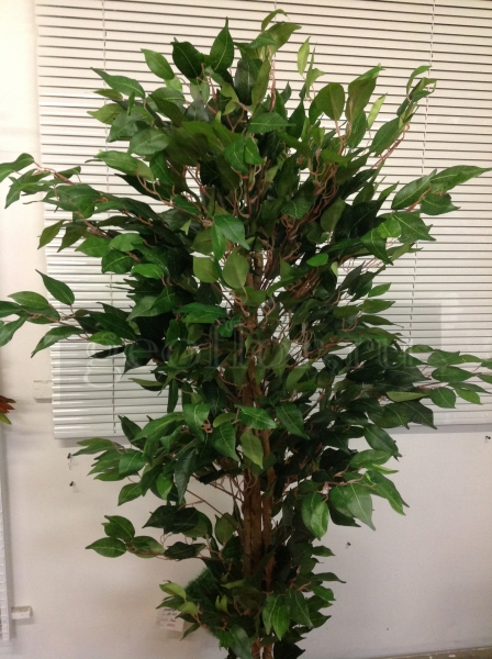 Дерево, фикус, 180 см