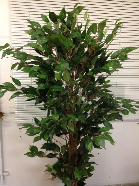 Дерево, фикус, 210 см
